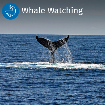 Whale watching activities