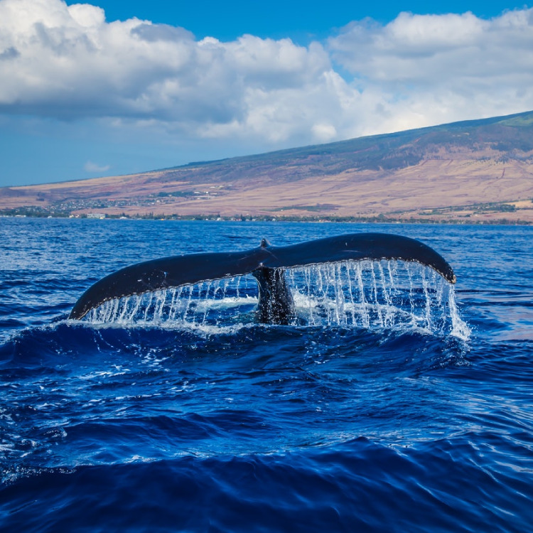 Whale watch in Panama