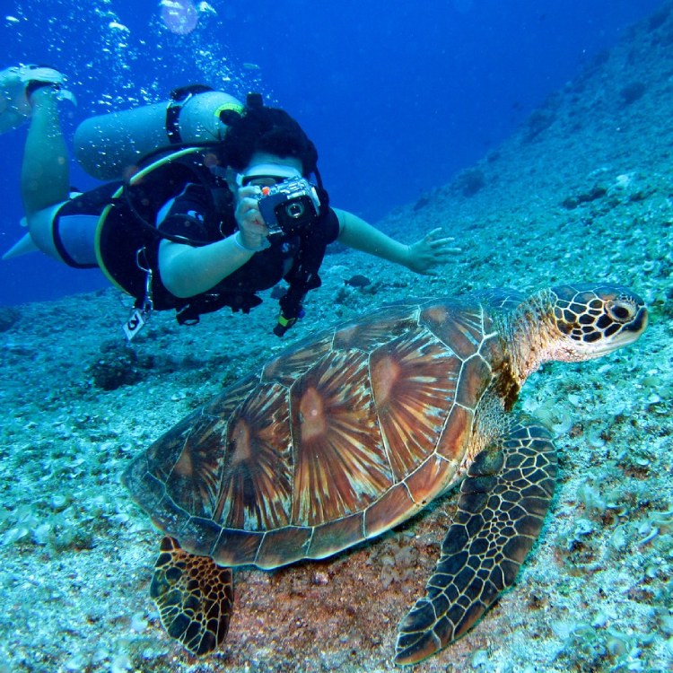 Diving with turtle in Panama